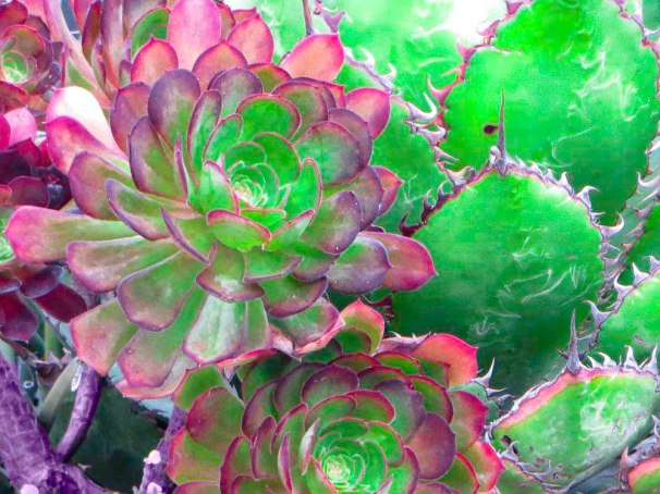 Succulents FLW