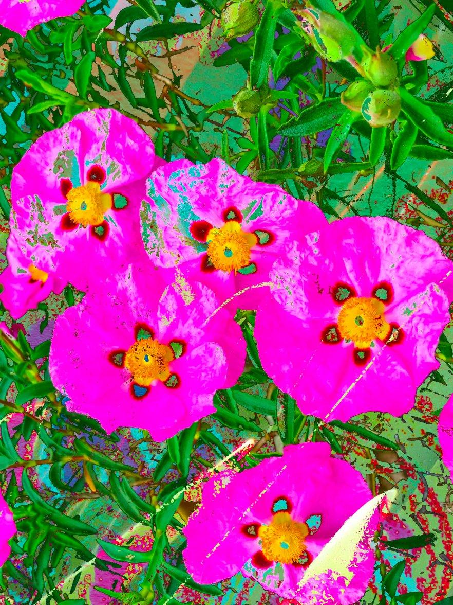 Abstract Flowers FL 40078 hjboc