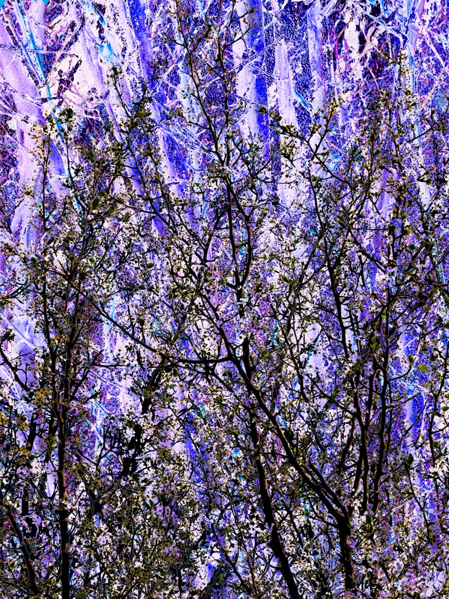 Abstract Trees FLW 5432 gbvfrr