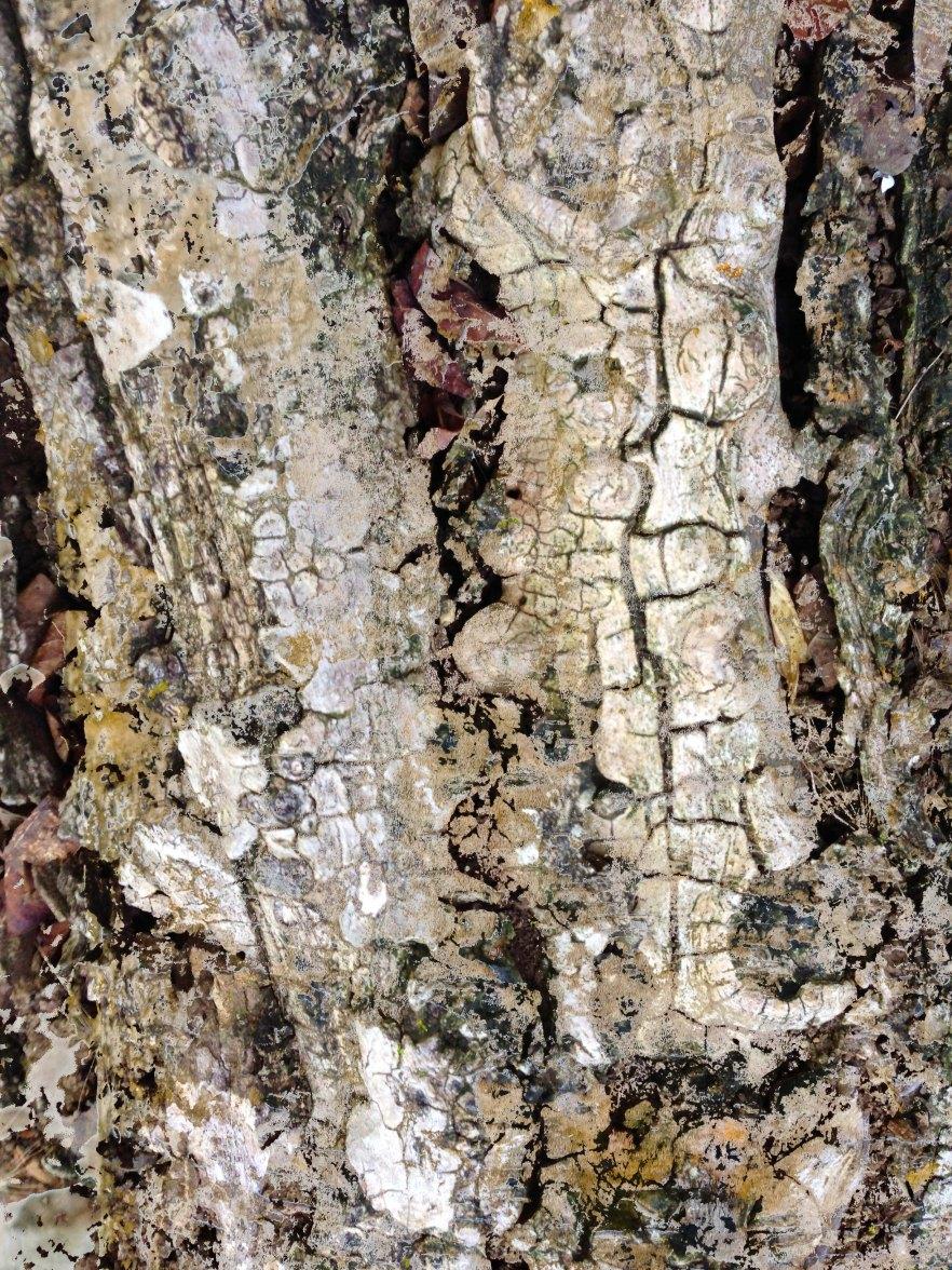Bark FLW 2112222 thhqsxzzxxyzz.jpg