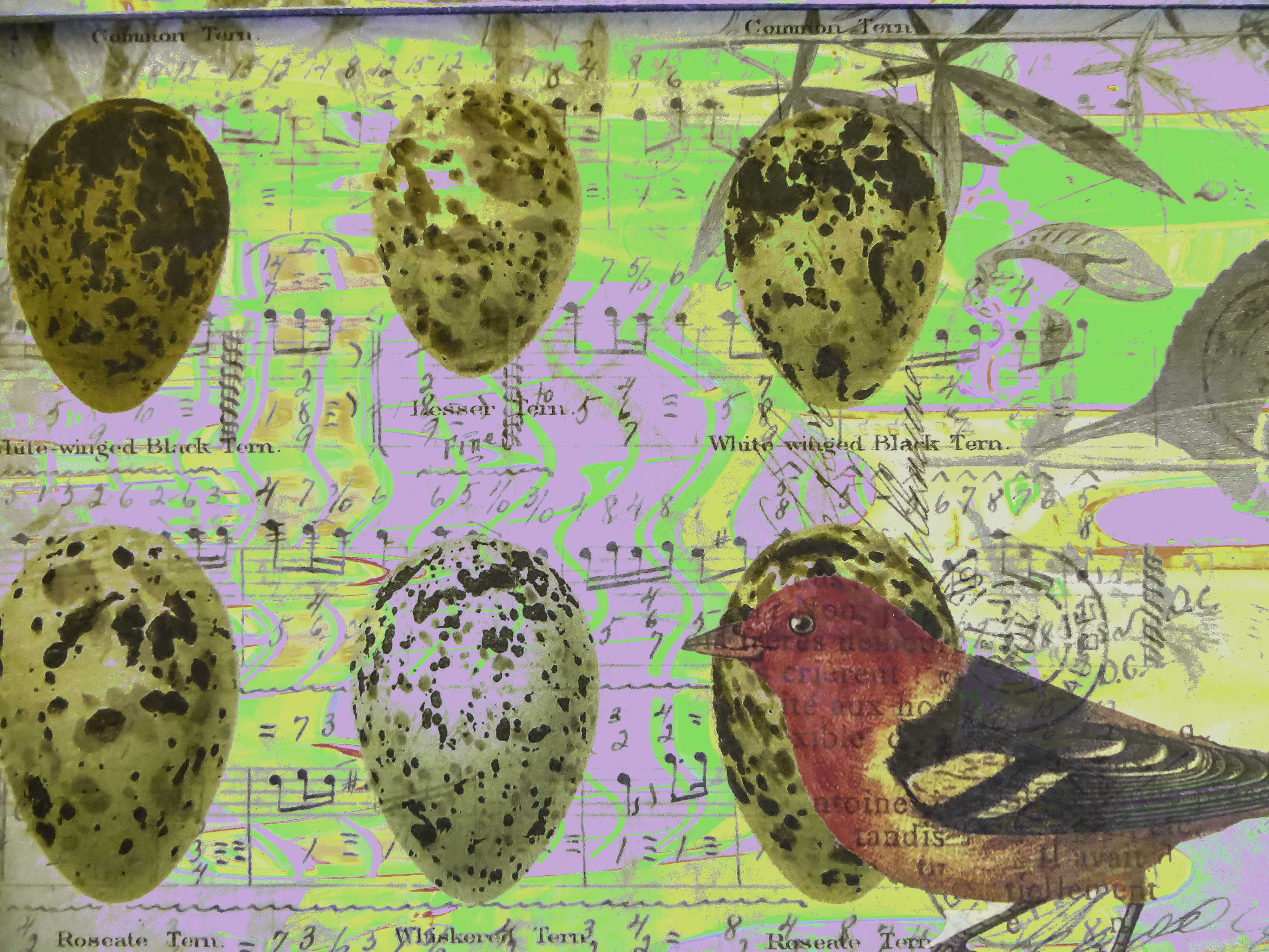 Bird Eggs FLW 2 051816