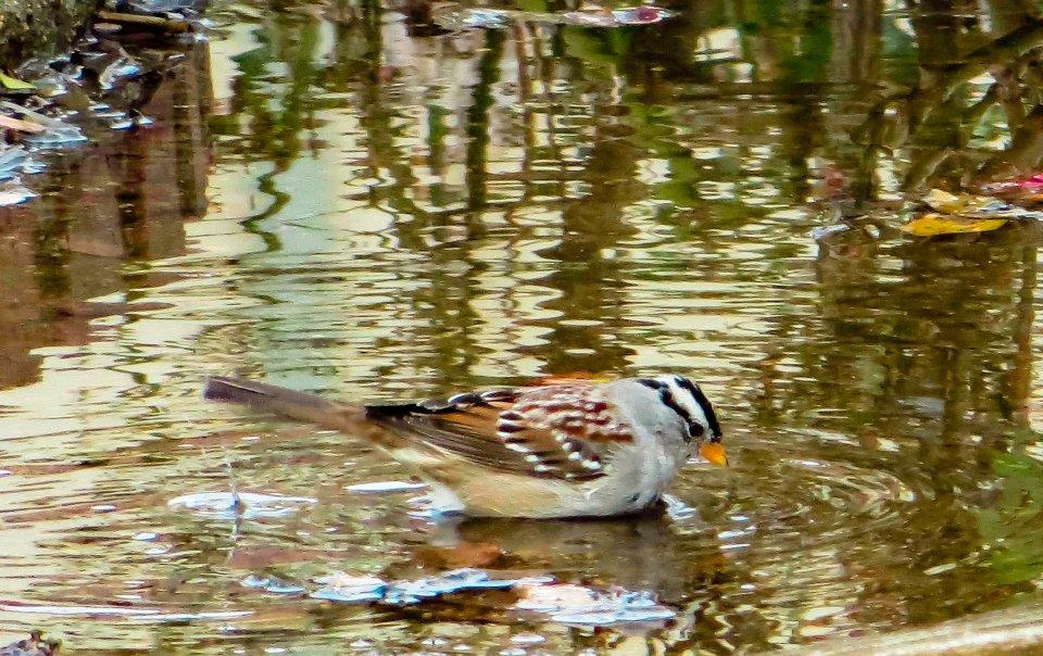 BirdFeeding FLW 2341 fpplf.jpg