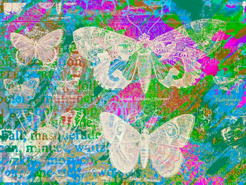 Butterflies 5533jjjkkllmn.jpg