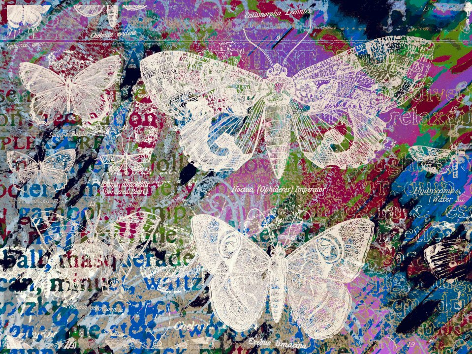 Butterflies Collage FLW 051816