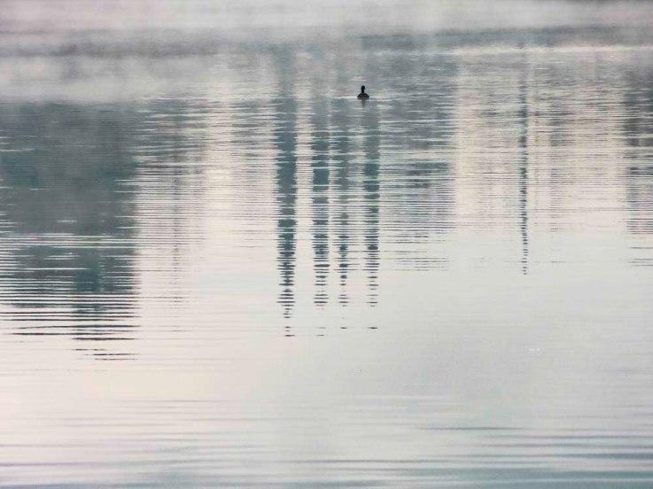 Duck in Fog FLW 4332