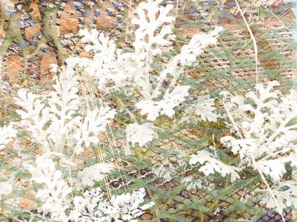 DustyMiller FLW 304957 ghfdl;s.jpg