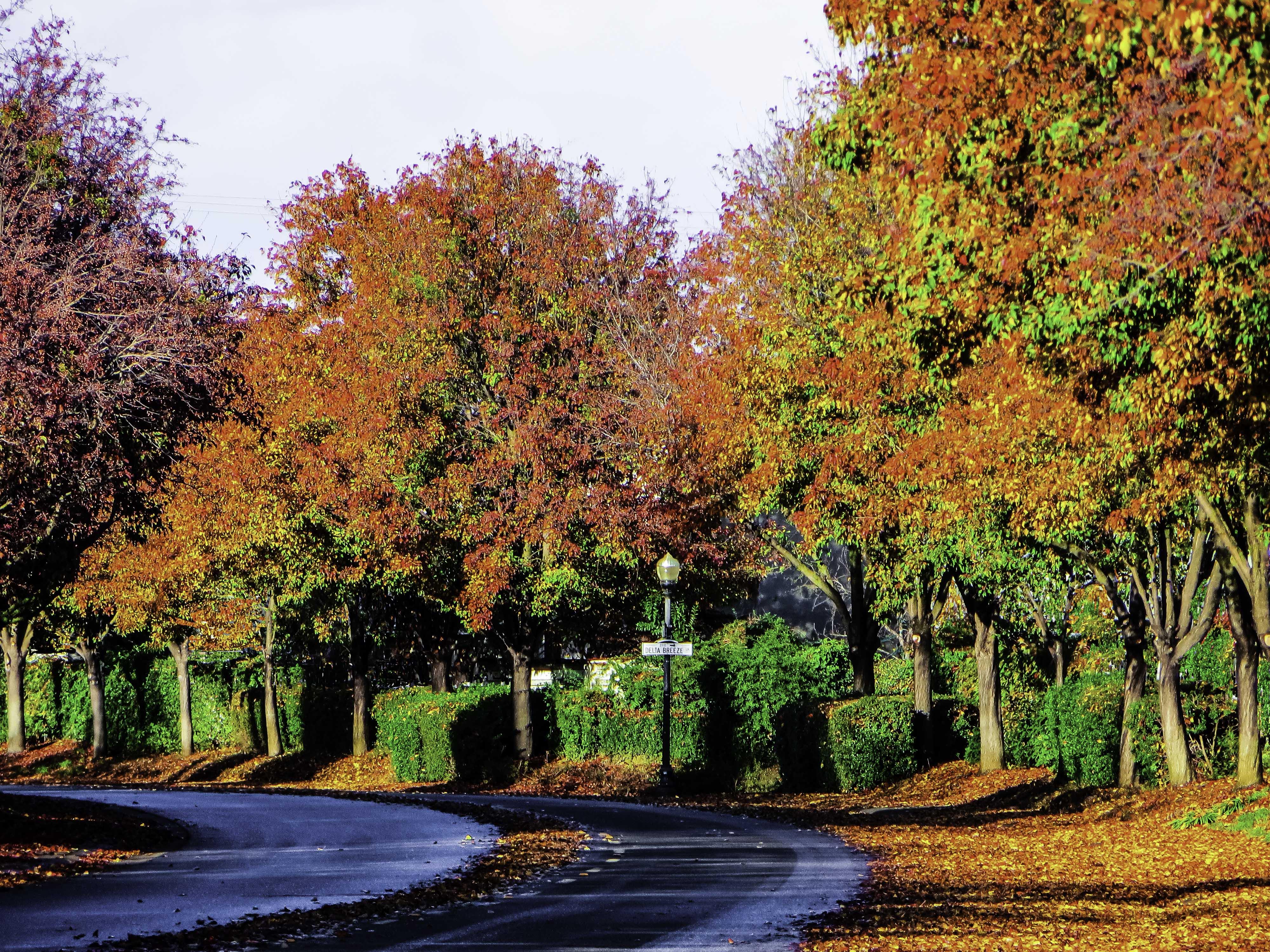 Fall Street FLW 88008 fgrtt