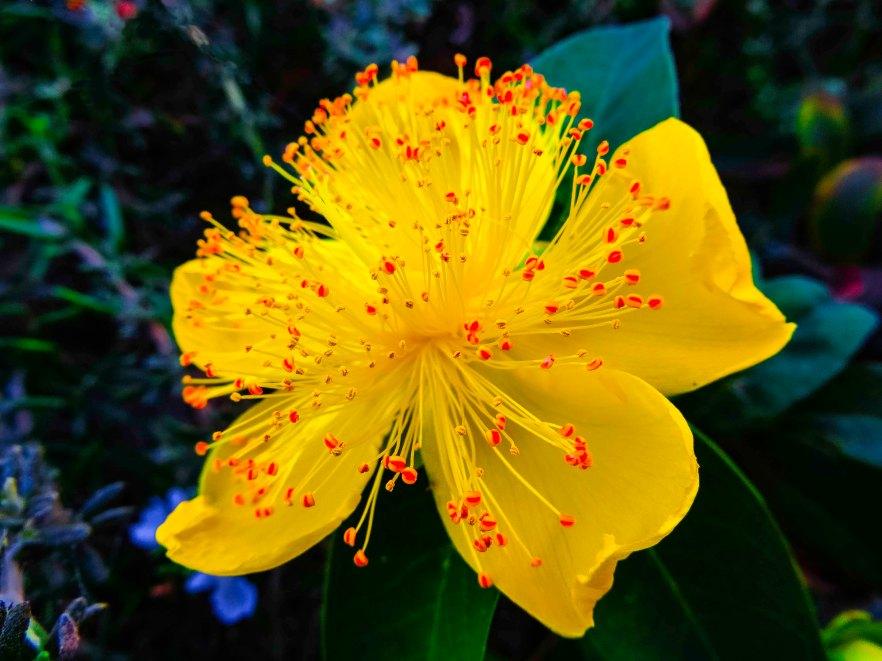 Flower5 FLW 200293 NATURE2.jpg