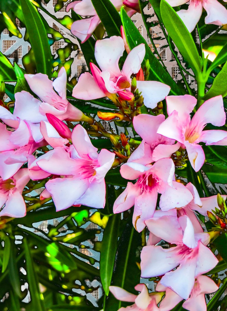 Flowergrate FLW tytyt676766.jpg