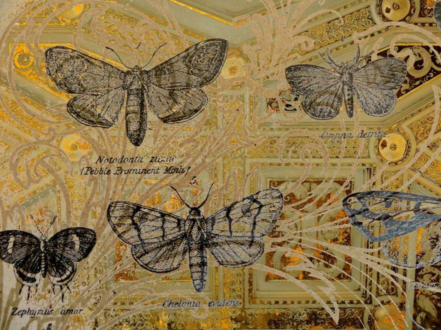 GoldButterflies FLW 3229 frtff