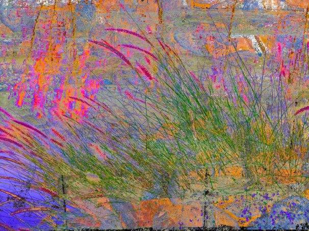GrassesAbstract FLW qwerwer 5564.jpg