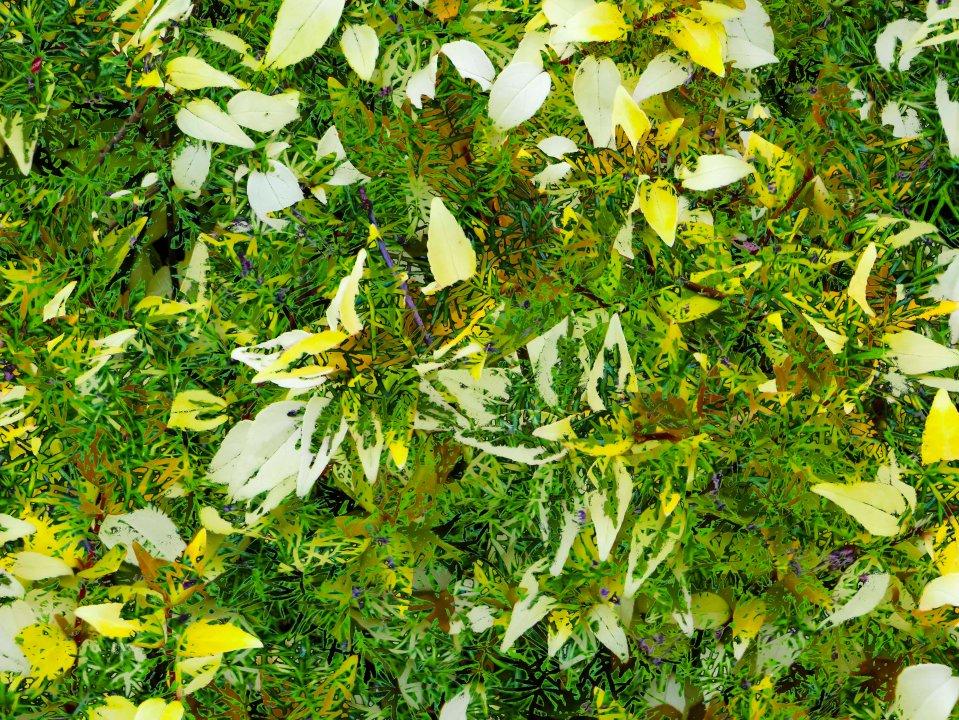 LeavesCollage FLW 21109 gurtd.jpg