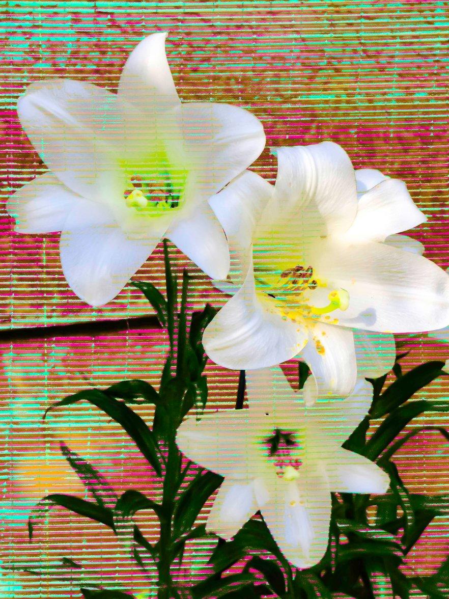 Lilies FLW 4664 grrgs