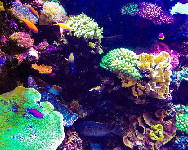 MBA FLW aquarium bgbbgt.jpg