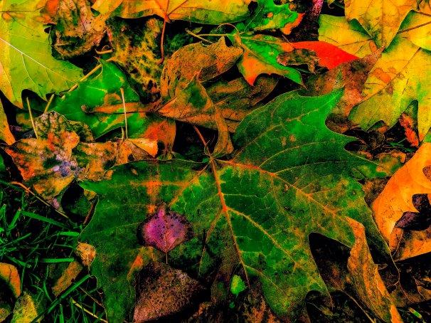 Nature Leaves FL9331