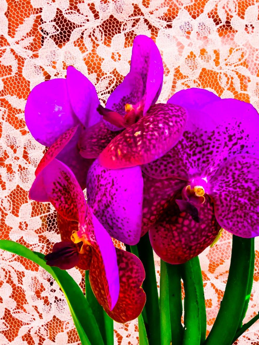 Orchids FLW 494949494 fgrfgfgf
