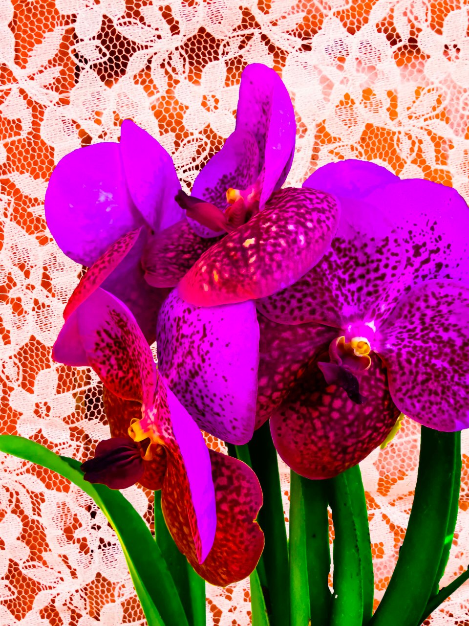 Orchids FLW 494949494 fgrfgfgf