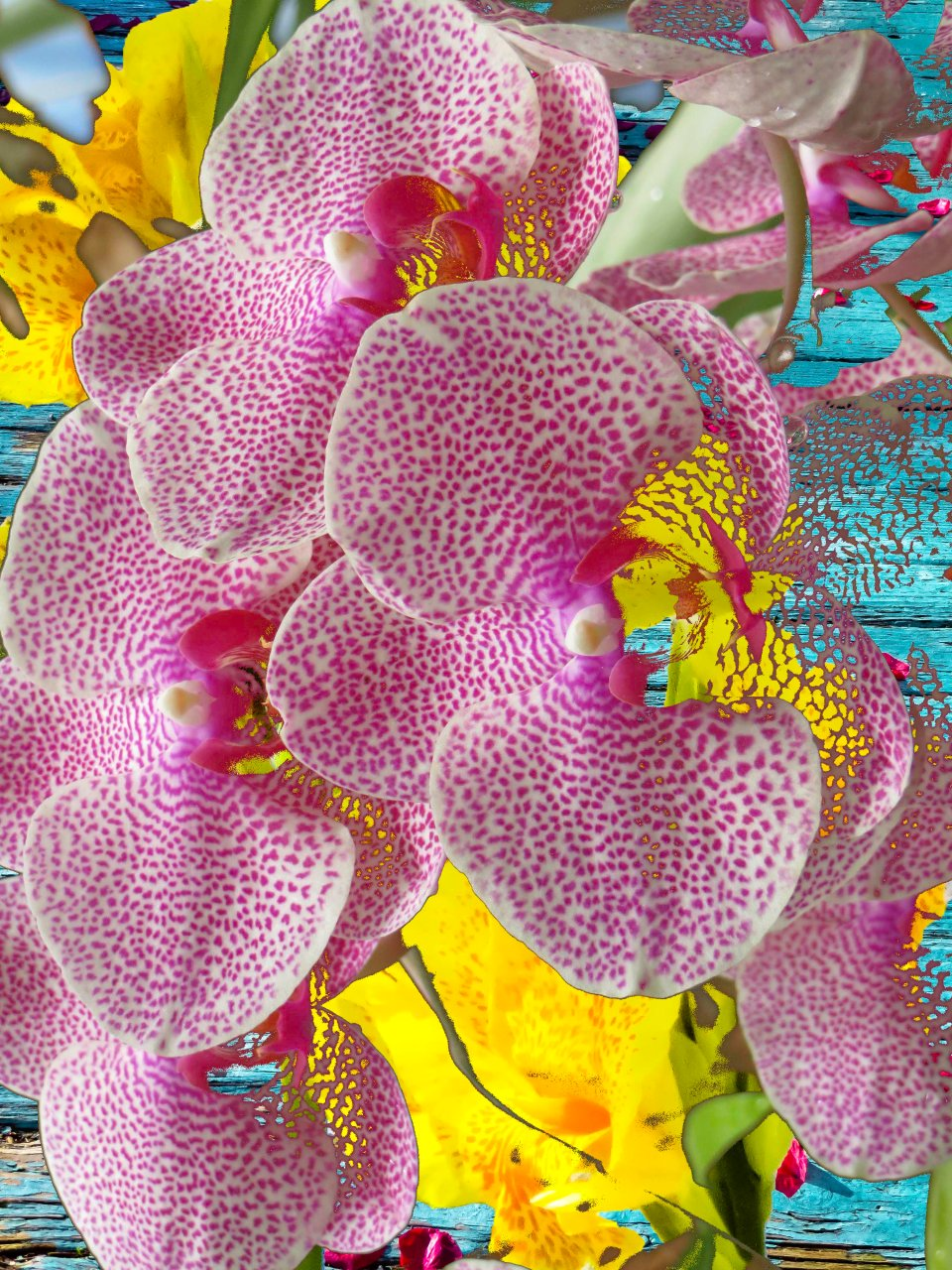 Orchids FLW 6038 fdpbzq.jpg