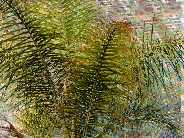 Palms FLW 237887 jklgh4