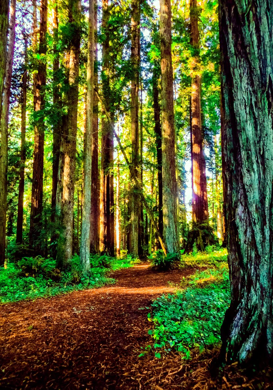sequoias-eureka-iii3-flw-4tyhnbcdffer