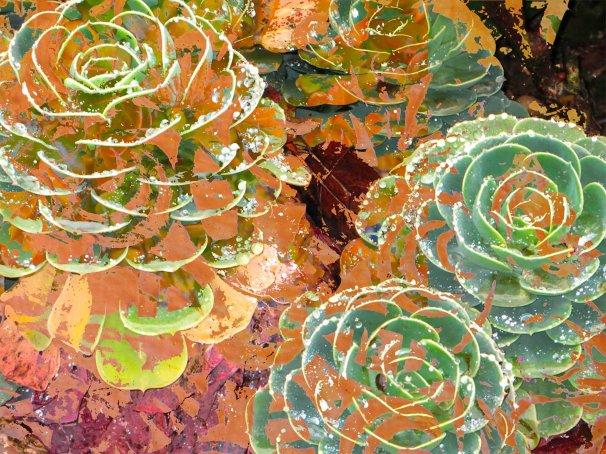 Succulents FLW 9933 wwddw