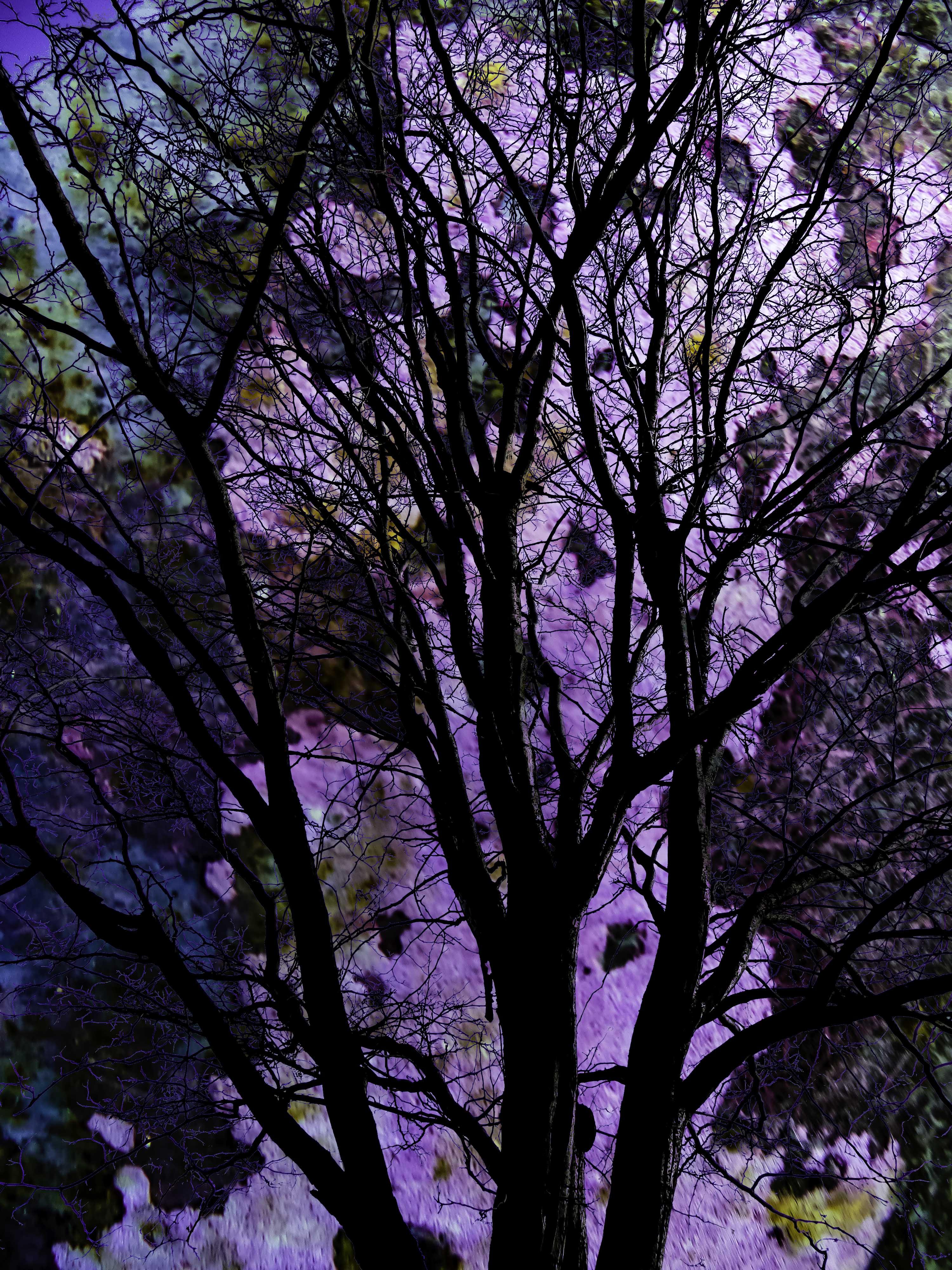 Tree at Night FLW 343434 ghgtgt