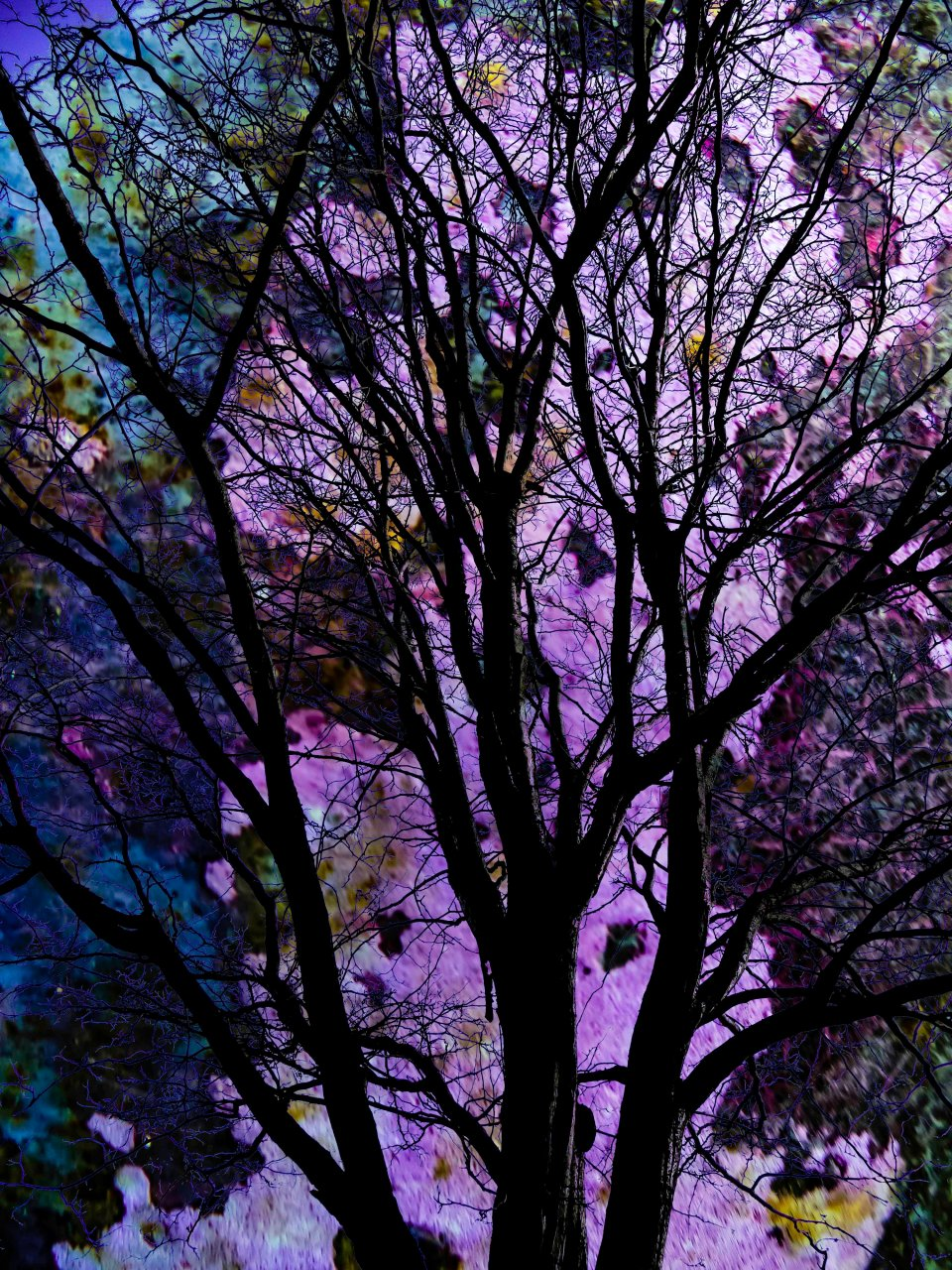 Tree at Night FLW 343434 ghgtgt
