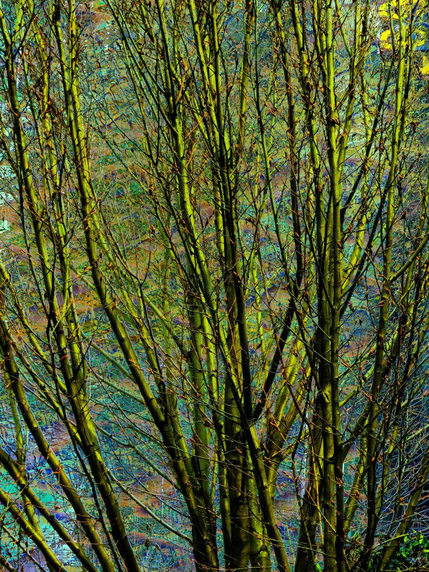 Trees Abstract FLW tgbn6789 grnn
