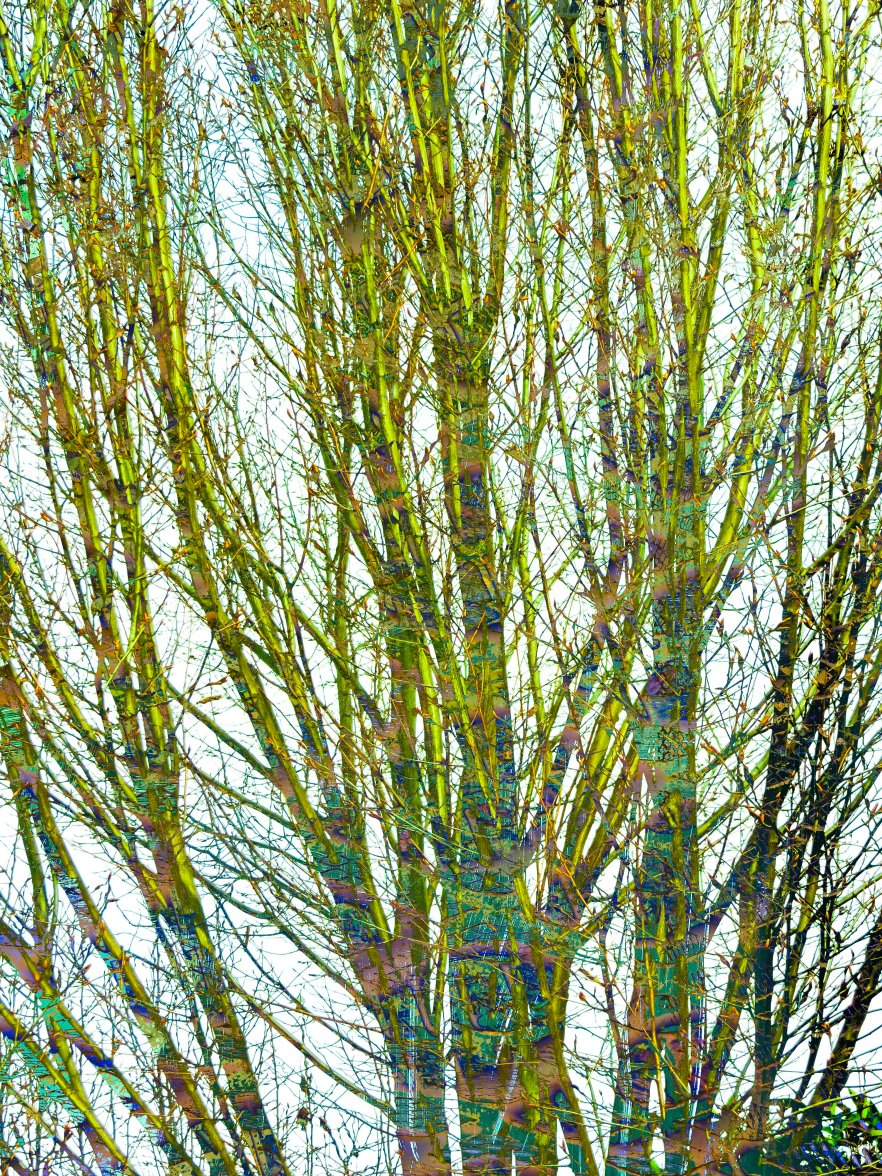 Trees Abstract FLW tgbn67891
