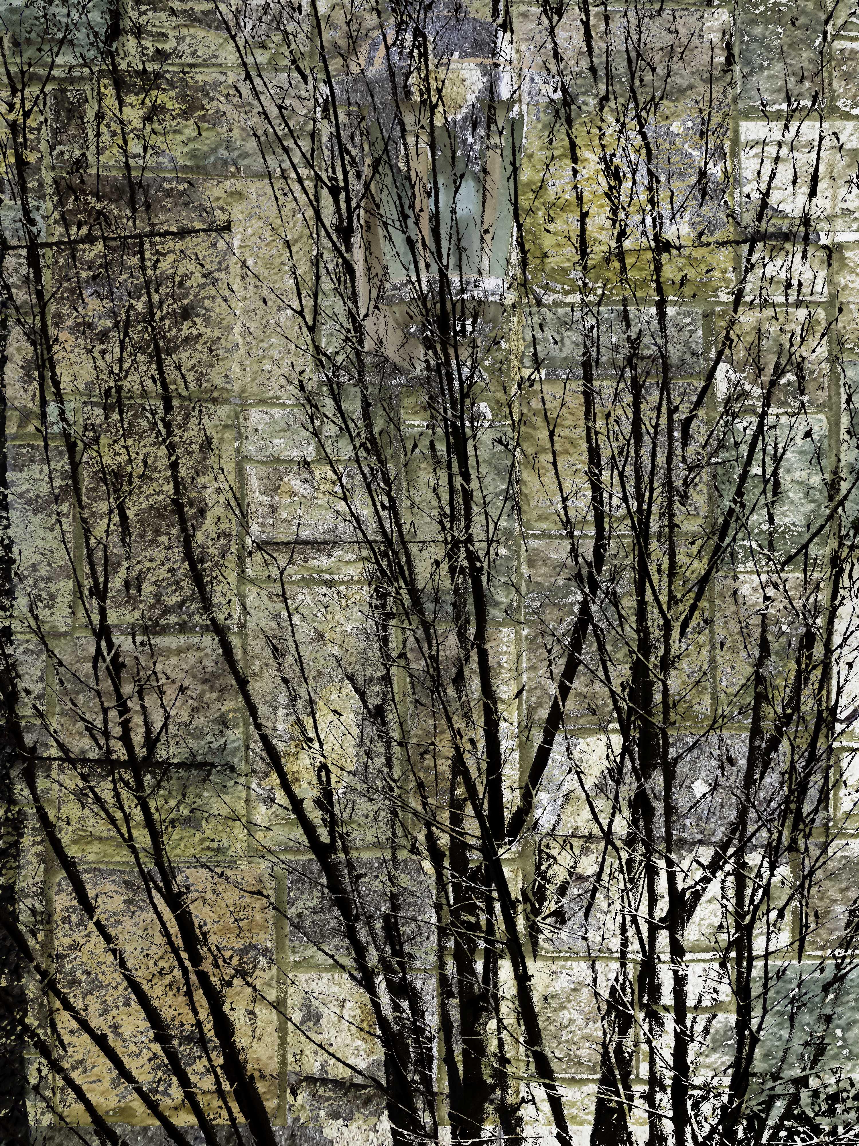 TreeScene FLW 51816