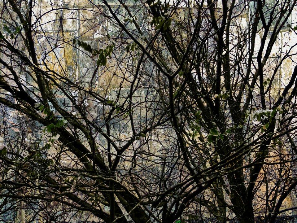 TreeScene FLW1005 tbszd