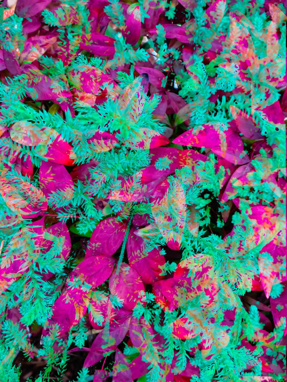 Winter Leaves FLW 1331 dwwdc.jpg