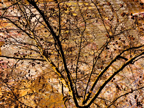Nature Abstract FLW 19779 treebran.jpg