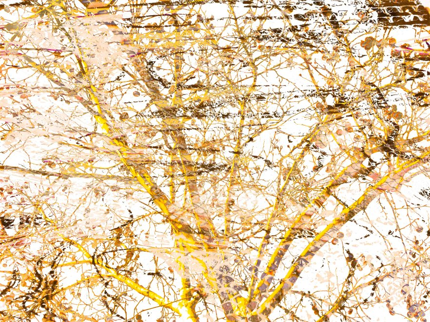 Nature Abstract FLW 19779 treewhte.jpg