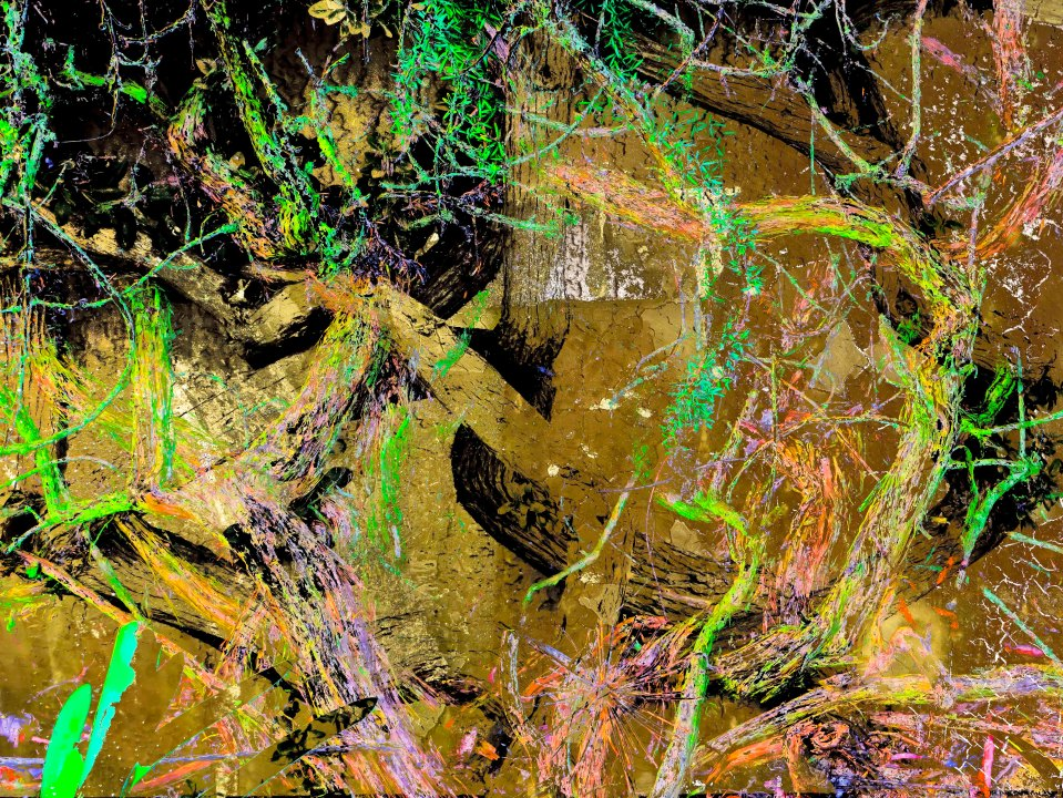 TreeBranches FLW 3456 kjuhh.jpg