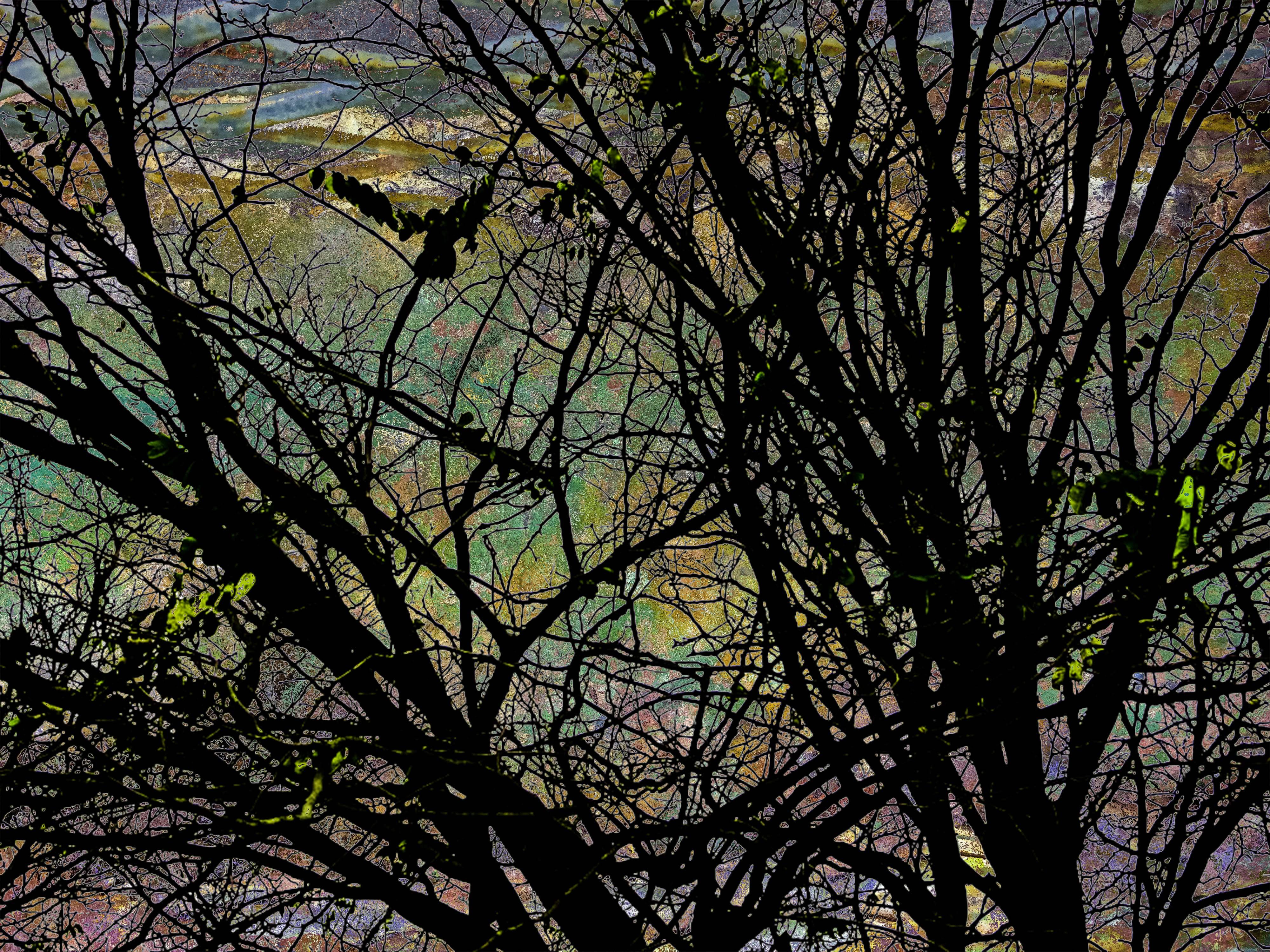 TreeRustScene FLW 4444444 bbbbbbbbccd.jpg