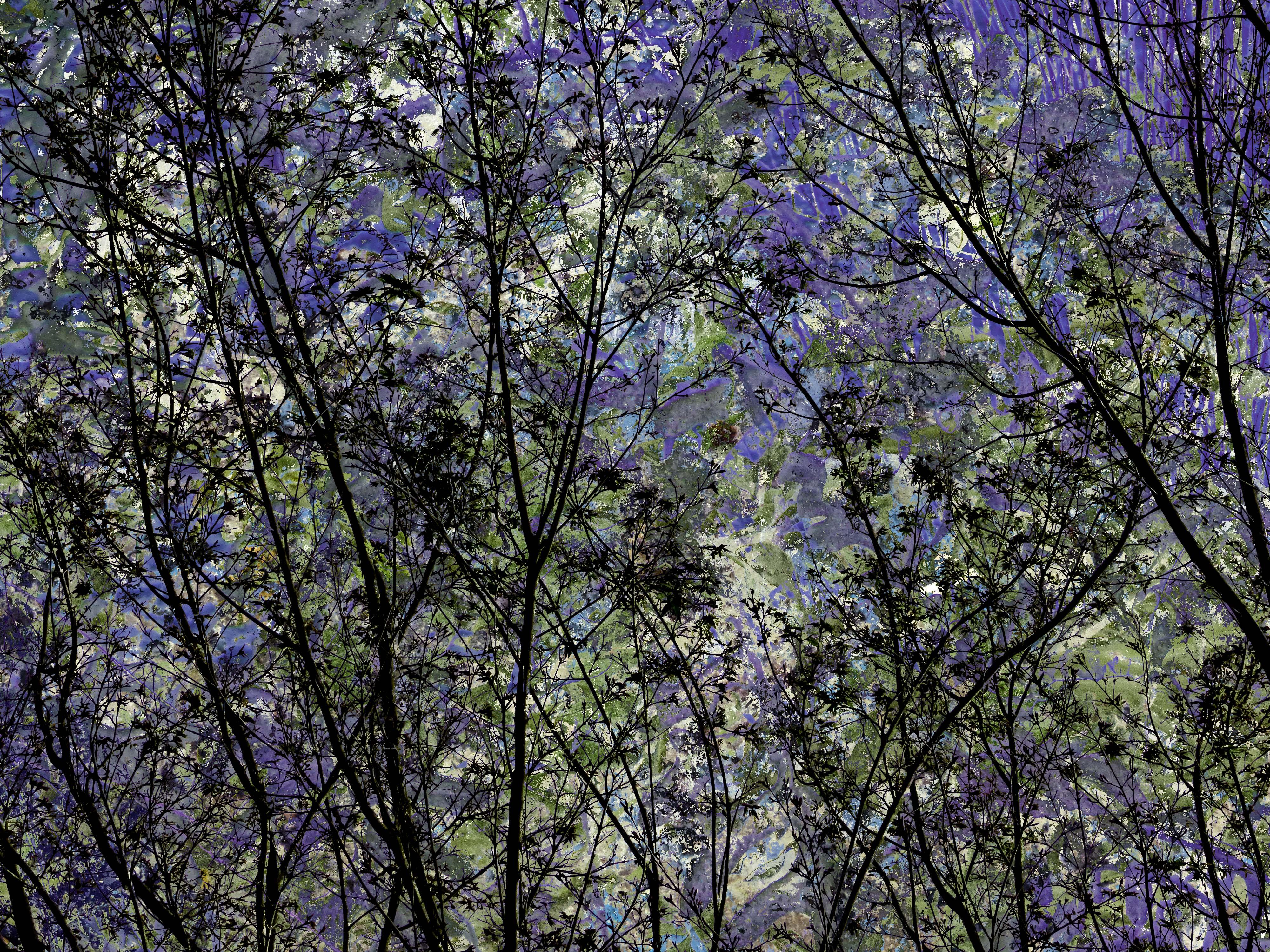 TreeSeries FLW 4545454 gbgbgh.jpg