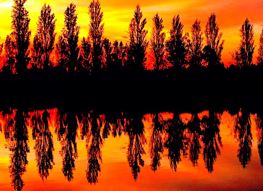 POPLARS AT SUNSET 455442332AA.jpg