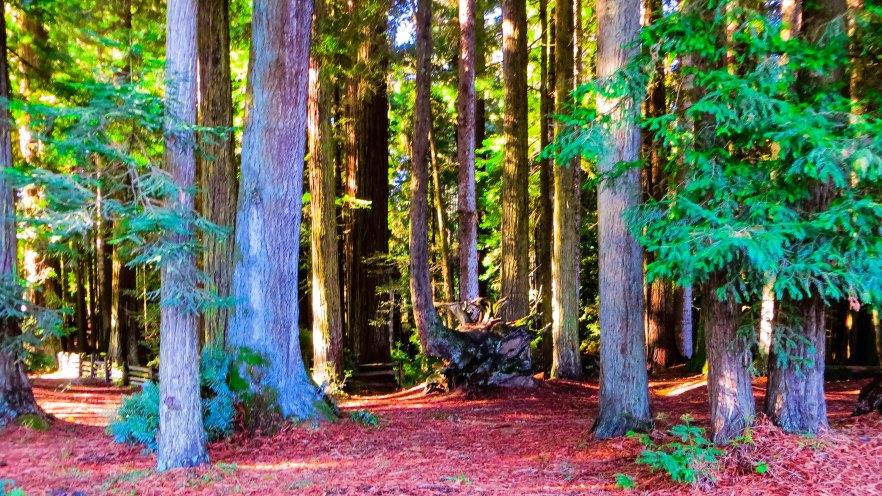 Sequoia Park Eureka FLW gfgfgf454545a.jpg