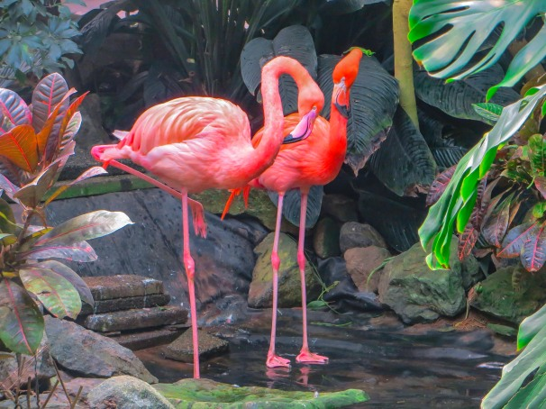 Flamingos 33a