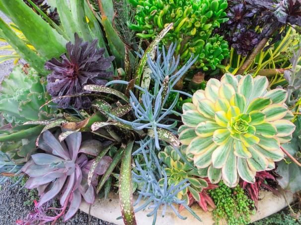 Succulentbowl.jpg