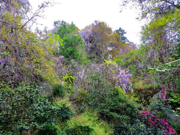 Charleston garden.jpg